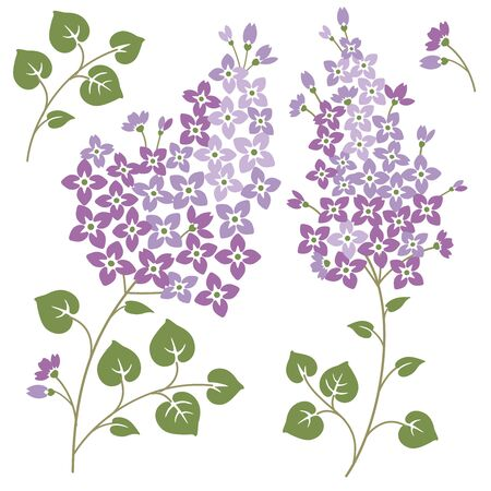 Lilac flowers set for your spring designs. On a white backgorund. Vector illustration. Иллюстрация