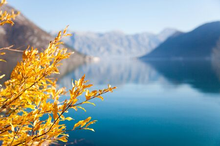 Autumn leaves on sea background. Yellow and orange tree near blue water. Fall beach with amazing reflections of mountains. The Kotor Bay, Montenegro. Copy space, place for text.
