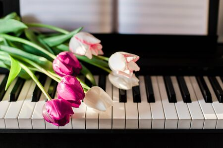 Tulips on piano. Concept of romantic music or melody, gift with flowers. Stock Photo