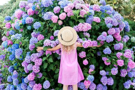 Little girl hugging big hydrangea bushes in garden. Pink, blue, lilac flowers blooming in spring and summer. Kid wearing in pink dress, straw hat. Romantic concept of childhood, tenderness. 免版税图像