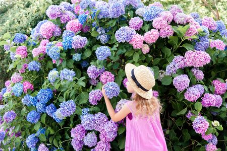 Little girl smell big hydrangea bushes in garden. Pink, blue, lilac flowers blooming in spring and summer. Kid wearing in pink dress, straw hat. Romantic concept of childhood, tenderness. 免版税图像