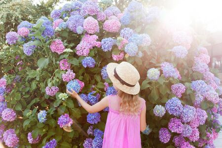 Little girl in big hydrangea bushes in sunset garden. Pink, blue, lilac flowers blooming in spring and summer. Kid wearing in pink dress, straw hat. Romantic concept of childhood, tenderness. 免版税图像