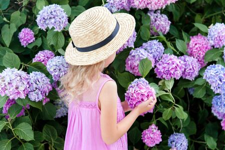 Little lady in hydrangea bushes in garden. Pink, blue, lilac flowers blooming in spring and summer. Kid wearing in pink dress, straw hat. Romantic concept of childhood, tenderness.