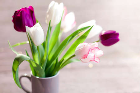 Tulips at wooden background. Spring blooming flowers in gray cup. Bouquet in vase. Pink, white, lilac and purple flora in sunshine. Close up.