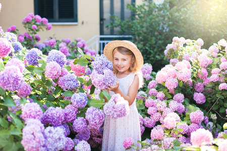 Little girl isin bushes of hydrangea flowers in sunset garden. Flowers are pink, blue, lilac and blooming by country house. Kid is in pink dress, straw hat. Romantic concept of childhood, tenderness.
