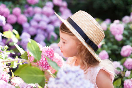 Little girl smells scent bushes of hydrangea flowers in sunny garden. Blooming flowers are pink, blue, lilac. Kid is in pink dress, straw hat. Romantic concept of tenderness, childhood. Banco de Imagens
