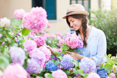 Gardening in bushes of hydrangea. Girl with smile is working in sunny country garden. Flowers are pink, blue and blooming in town street by house. Woman with bouquet is gardener and florist.