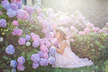Little girl sitting in bushes of hydrangea flowers in sunset garden. Flowers are pink, blue, lilac and blooming in town street. Kid in pink dress, straw hat. Romantic concept of childhood, tenderness Banco de Imagens