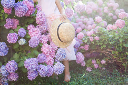 Little girl is in bushes of hydrangea flowers in sunset garden. Flowers are pink, blue, lilac and blooming in town. Kid is in pink dress, holding straw hat. Concept of childhood, tenderness. Banco de Imagens