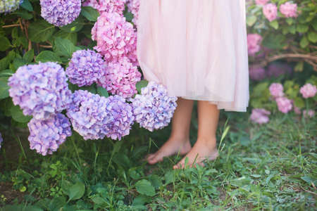 Little girl is in bushes of hydrangea flowers in garden. Flowers are pink, blue, lilac and blooming in town streets. Kid is barefoot in pink dress. Concept of childhood, tenderness.
