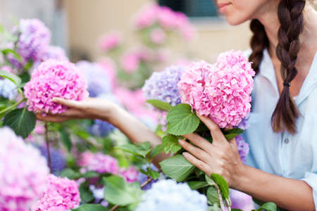 Gardening in bushes of hydrangea. Girl collects bouquet in country garden. Flowers are pink, blue and blooming in town street. Woman is gardener and florist. Banco de Imagens