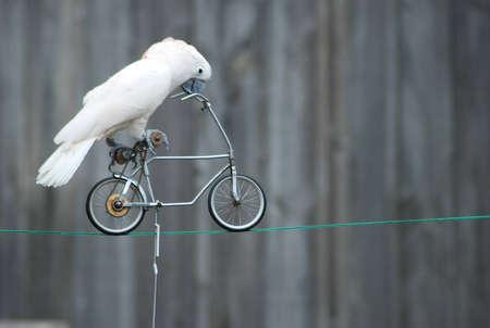 Papegaai op de fiets