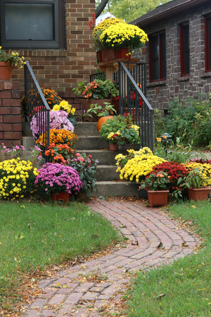 boundary: Way to the main entrance stair of the stylish house decorated by colorful potted flowers for autumn holidays season. Stock Photo