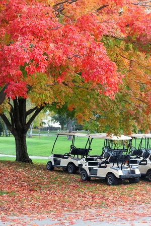 Beautiful fall landscape with red colored maple tree close up in sunlight on a golf course, golf carts and red foliage on a ground. Midwest USA, Wisconsin. Vertical composition. Stock Photo