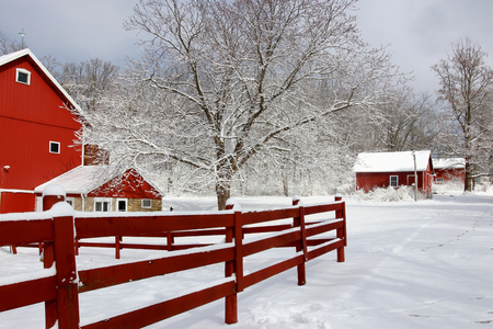 Rural landscape with red barns, wooden red fence, trees and road covered by fresh snow. Scenic winter view at Wisconsin, Midwest USA, Madison area.