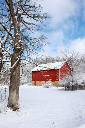 Scenic view with red barn in the cowered by fresh snow wood. Agriculture, farming and rural life at winter background. Vertical composition.