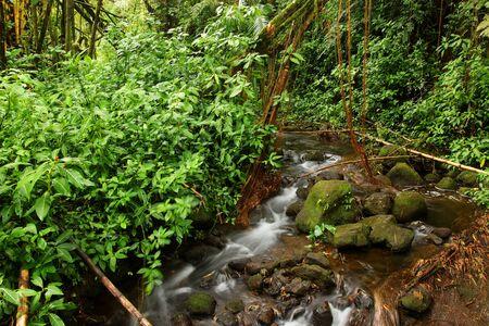 Scenic landscape with water stream inside rainforest. Akaka Falls State Park, Hawaii Big Island, USA.