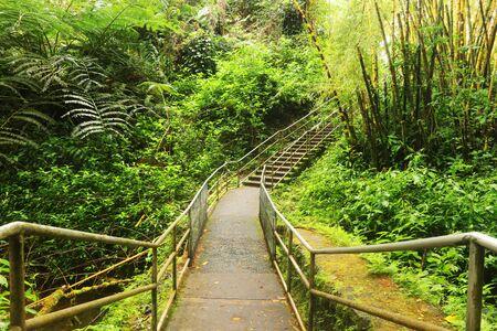 Scenic landscape with boardwalk and stairs to waterfall inside the rainforest. Akaka Falls State Park, Hawaii Big Island, USA. Фото со стока