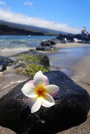 Scenic view with white frangipani flower on the black lava stone in the pacific ocean beach in a shallow depth of field. Hawaii Big Island, USA.