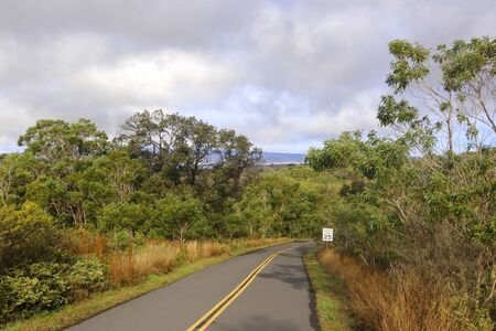 Mauna Loa lower level landscape. Scenic morning view with paved road to the summit between tress and bushes.