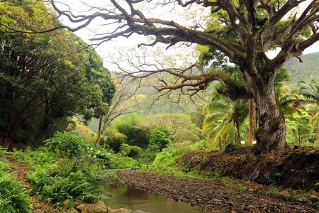 Scenic view of residential neighborhood between lush tropical plants and trees at Waipio Valley. Фото со стока
