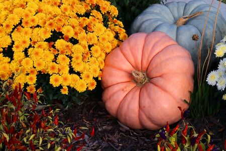 Bright colors fall season outdoor decoration with chrysanthemums, pumpkins and decorative red chili pepper on a ground as a part of traditional american autumn holidays culture.