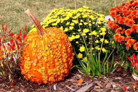 Bright colors fall season outdoor decoration with chrysanthemums,  pumpkins and decorative red chili pepper on a ground as a part of traditional american autumn holidays culture. Фото со стока