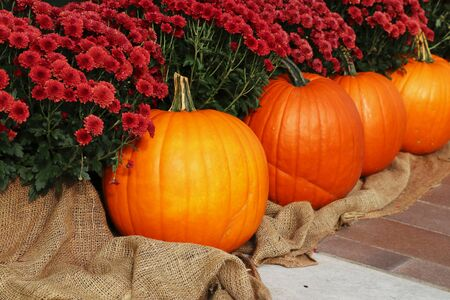 Bright colors fall season outdoor decoration with chrysanthemums and pumpkins as a part of traditional american autumn holidays culture. Фото со стока