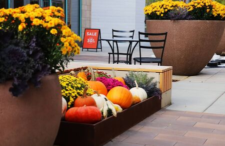 Outlet shopping mall decorated with bright chrysanthemums and pumpkins for autumn season holidays, outdoor furniture set and outside sale advertisement sign. Close up horizontal composition in shallow depth of field.