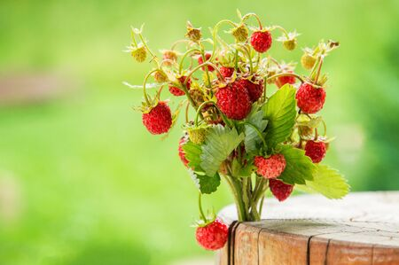 Close up, macro. Forest. Juicy bouquet Of Wild Strawberries on green background. Copy space.