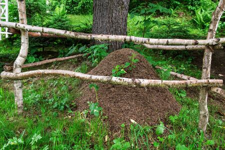 Close up, macro. Ants Nest. Huge anthill with colony of ants in summer forest. Carpathians.