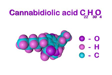 Structural chemical formula and molecular model of cannabidiolic acid (CBDA), an active ingredient in cannabis derived from the hemp plant. Medical background. Scientific background. 3d illustration Banque d'images - 131150486