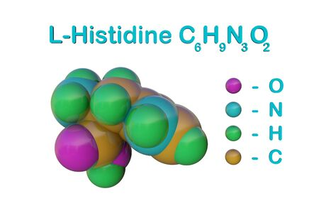Structural chemical formula and space-filling molecular model of l-histidine or histidine, an essential amino acid in human. Medical background. Scientific background. 3d illustration Banco de Imagens