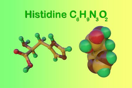 Structural chemical formula and molecular model of l-histidine or histidine, an essential amino acid in human. Medical background. Scientific background. 3d illustration