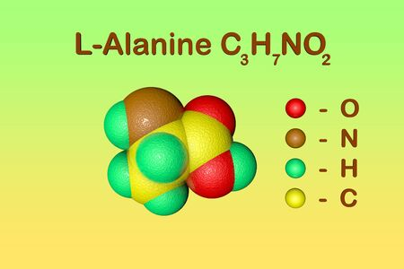 Structural chemical formula and space-filling molecular model of l-alanine or alanine, an amino acid used in the biosynthesis of proteins. Scientific background. 3d illustration Фото со стока