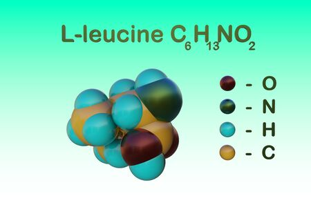 Structural chemical formula and space-filling molecular model of l-leucine, an amino acid used in the biosynthesis of proteins. Scientific background. 3d illustration