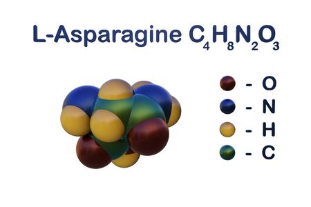 Structural chemical formula and molecular model of l-asparagine, an amino acid required for the synthesis of many important cellular proteins in normal human cells. 3d illustration Banco de Imagens