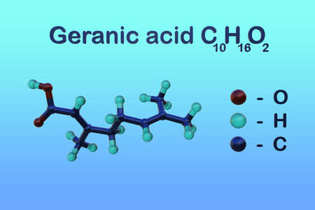 Structural chemical formula and molecular model of geranic acid, a polyunsaturated fatty acid, a double bond isomer of nerolic acid and a pheromone used by some organisms. 3d illustration