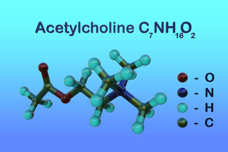 Structural chemical formula and molecular model of acetylcholine that serves transmitter substance of nerve impulses within the central and peripheral nervous systems. 3d illustration