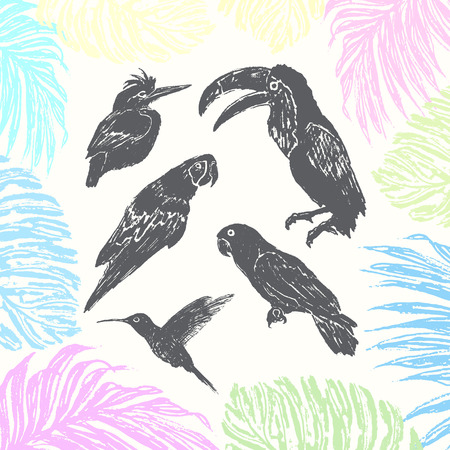 tucan: Ink hand drawn birds collection