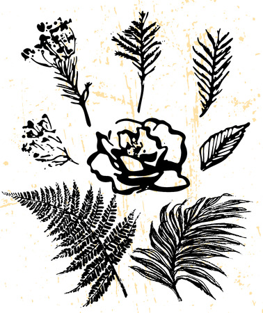 frond: Ink hand drawn floral elements