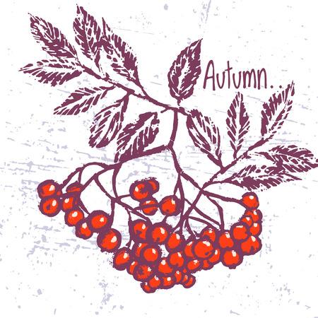 Vector background with rowan ornament 向量圖像