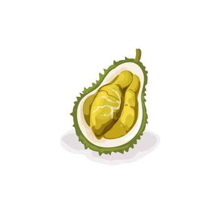 dragon fruit: Vector tropical dragon fruit