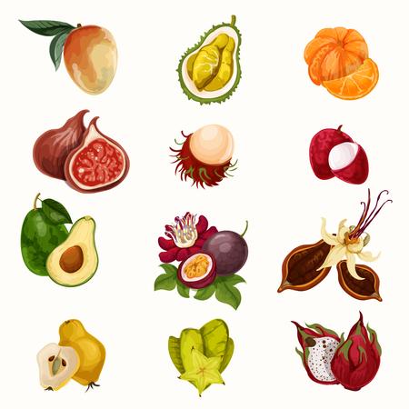 tropical fruit: Vector tropical fruit illustration Illustration