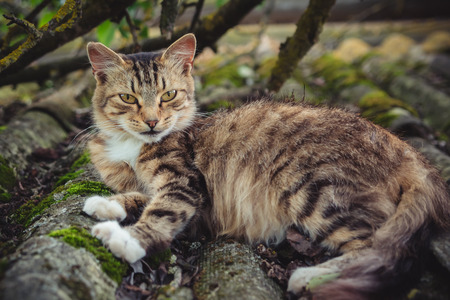 A colored tabby cat lies on an old roof covered with moss