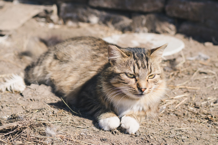 Beautiful fluffy striped cat lying on the ground on a sunny day Stock Photo