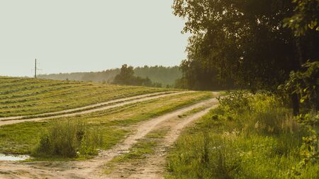 Country road, field with mowed grass and green forest in sunset backlight, soft focus