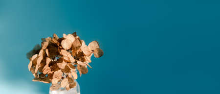 Small bouquet of dried hydrangea flowers on a blue background in bright natural light, selective focus