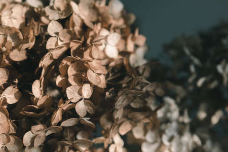 Dry hydrangea bouquet on dark background, selective focus