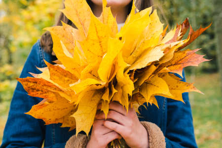 Bouquet of yellow maple leaves in the hands of a girl in an autumn park